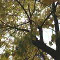 San_Gregorio_da_Sassola_-_08_23-11-19-600x450